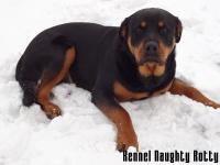 Rotvajler na snehu Connie Naughty Rotty