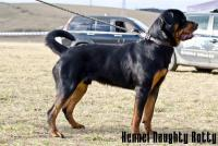 Rotvajler Deimos Naughty Rotty